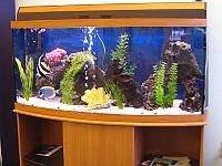 Saltwater,How to set up saltwater aquarium,Saltwater Equipment,Saltwater Coral & Reef,Saltwater Fish
