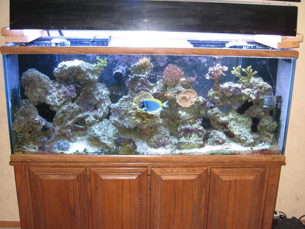 Fish aquarium gallery of aquatic designs aquarium for 55 gallon hexagon fish tank