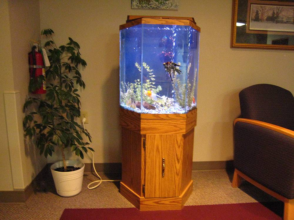 45 gallon hexagon aquarium 1000 aquarium ideas for Hexagon fish tank lid