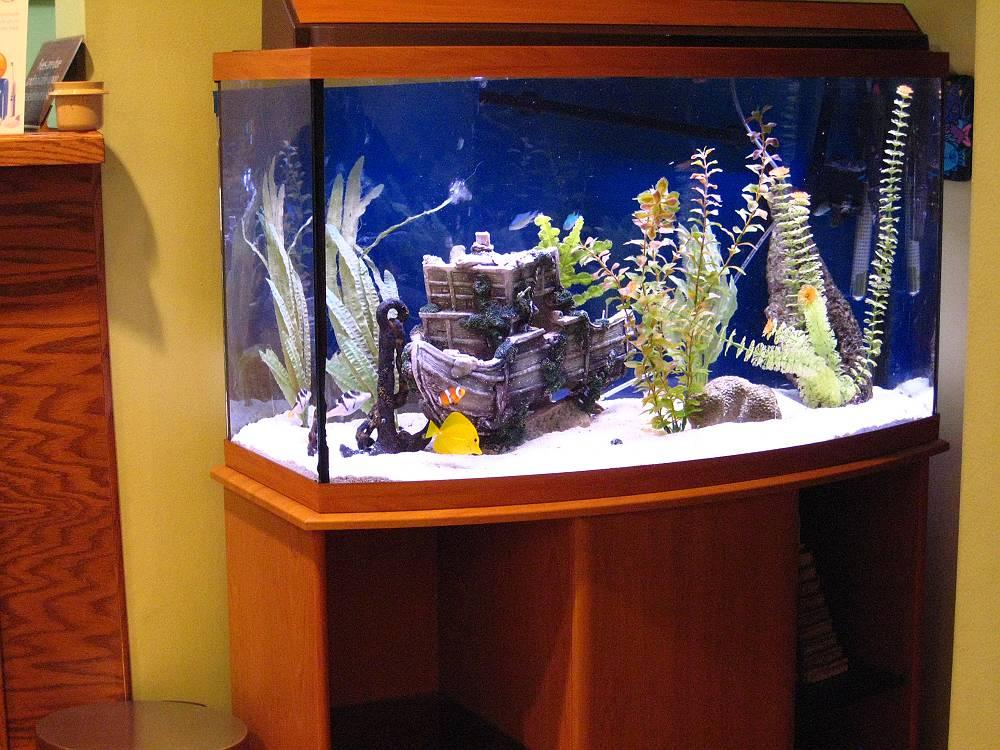 Fish aquarium gallery of aquatic designs aquarium for Octagon fish tank with stand