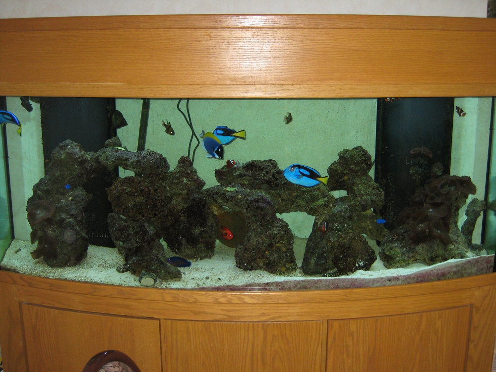 Fish aquarium gallery of aquatic designs aquarium for Fish tank net