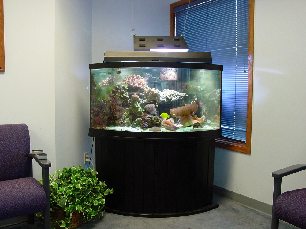 Etonnant Fish Aquarium Gallery Of Aquatic Designs | Aquarium Maintenance | Grand  Forks, ND