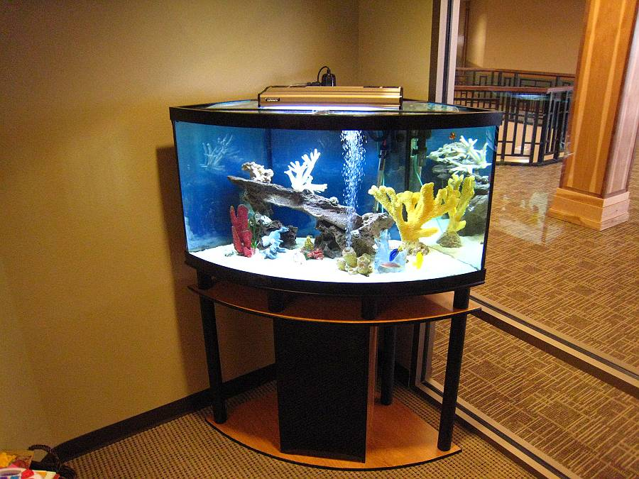 Fish Aquarium Gallery Of Aquatic Designs Aquarium