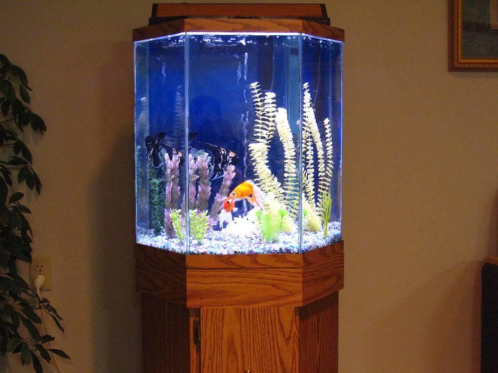 Fish aquarium gallery of aquatic designs aquarium for 90 gallon fish tank dimensions