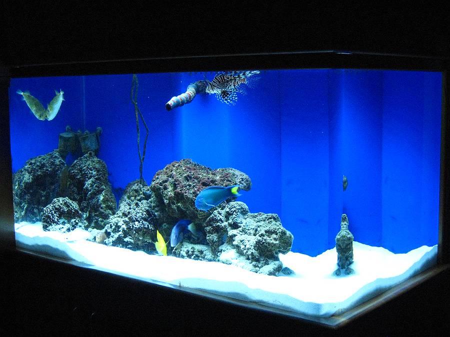 Fish Aquarium Gallery Of Aquatic Designs